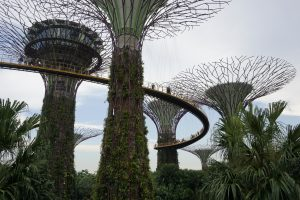 Gardens by the bay skywalk